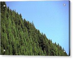Douglas Fir Forest, British Columbia, Canada Acrylic Print by Kaj R. Svensson