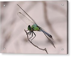 Dragon Fly Acrylic Print by Jeanne Andrews