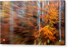 Acrylic Print featuring the photograph Dream Forest by Odon Czintos