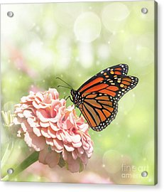 Dreamy Monarch Butterfly Acrylic Print