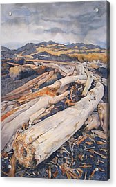 Driftwood Gathering Acrylic Print by Leslie Redhead