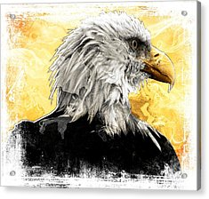 Eagle 6 Acrylic Print by Carrie OBrien Sibley