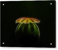 Enigma Acrylic Print by Blair Wainman