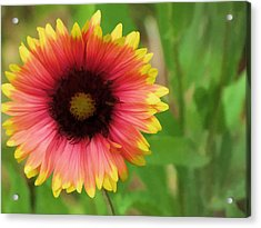Acrylic Print featuring the photograph Enough Of The Flowers by John Crothers