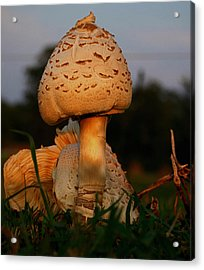 Acrylic Print featuring the photograph Evening Mushroom by Karen Harrison