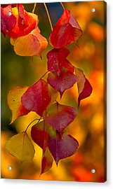 Acrylic Print featuring the photograph Fall Color 1 by Dan Wells