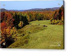 Fall Color Randolph County West Virginia Acrylic Print by Thomas R Fletcher