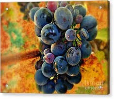 Fall Harvest Acrylic Print by Kevin Moore