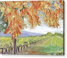 Fall In Napa Valley Acrylic Print by Barbara Anna Knauf