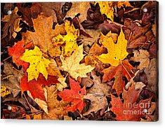 Fall Leaves Background Acrylic Print by Elena Elisseeva