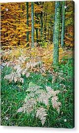 Fall Scenery Acrylic Print by Maciej Markiewicz