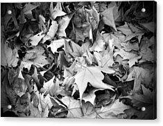 Fallen Leaves Acrylic Print by Fabrizio Troiani