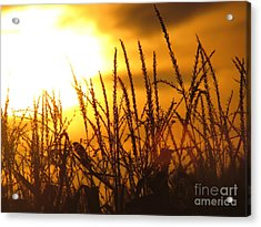 Farming Sunset Acrylic Print by France Laliberte
