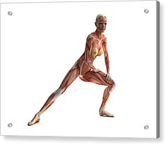 Female Muscles, Artwork Acrylic Print by Sciepro