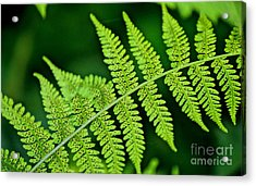 Acrylic Print featuring the photograph Fern Seed by Sharon Elliott