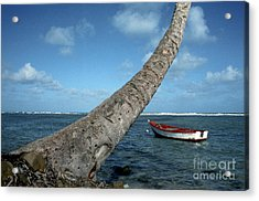 Fishing Boat And Palm Trunk Acrylic Print by Thomas R Fletcher