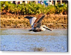 Flight Acrylic Print by Barry R Jones Jr