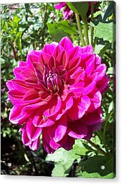 Floral  Acrylic Print by Rebecca Overton