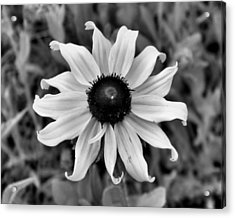 Acrylic Print featuring the photograph Flower by Brian Hughes