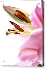 Flower Close-up Acrylic Print by Ignaz Uri
