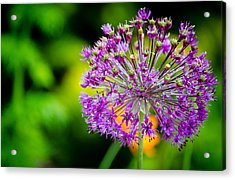 Flowers Acrylic Print by Mike Rivera