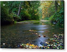 Fly Fisherman's Dilemma  Acrylic Print by Clifford Crawford