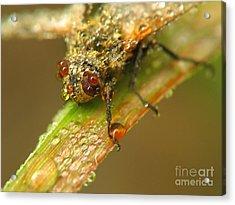 Fly Acrylic Print by Odon Czintos