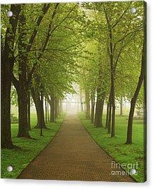 Foggy Park Acrylic Print by Elena Elisseeva