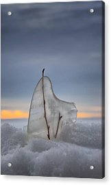 Frozen In Time Acrylic Print by Heather  Rivet