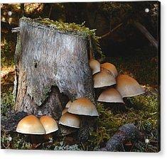Fungus Unamed Acrylic Print