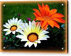Garden Daisies Acrylic Print