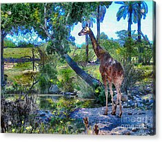 George The Giraffe Acrylic Print