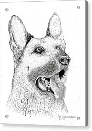 Acrylic Print featuring the drawing German Shepherd Dog by Jim Hubbard