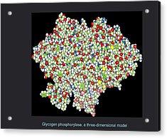 Glycogen Phosphorylase, Molecular Model Acrylic Print by Francis Leroy, Biocosmos