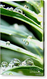 Acrylic Print featuring the photograph Gouttes by Sylvie Leandre