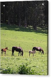 Grace's Horses Acrylic Print