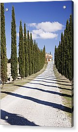 Gravel Road Lined With Cypress Trees Acrylic Print by Jeremy Woodhouse