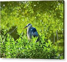 Great Blue Heron Hiding Acrylic Print by J Larry Walker