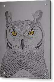 Acrylic Print featuring the drawing Great Horned Owl by Gerald Strine