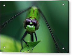 Green Dragon Acrylic Print by Paul Slebodnick