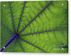 Green Leaf Acrylic Print by Urban Shooters