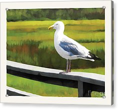 Gull One Acrylic Print by David Klaboe