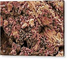 Gypsum Crystals, Sem Acrylic Print