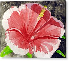 Acrylic Print featuring the painting Happy Hibiscus by Debi Singer