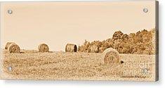 Hay Rolls  Acrylic Print by Laurinda Bowling