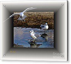 Acrylic Print featuring the digital art Heads Up by Dale   Ford