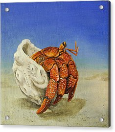 Hermit Crab Acrylic Print by Cindy D Chinn