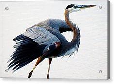 Heron Acrylic Print by Paulette Thomas