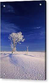 Hoar Frost On Trees, Bungay, Prince Acrylic Print by John Sylvester