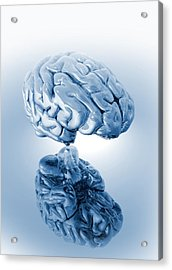 Human Brain, Artwork Acrylic Print by Victor Habbick Visions